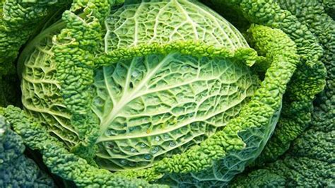 How To Grow Cabbages / Rhs Gardening