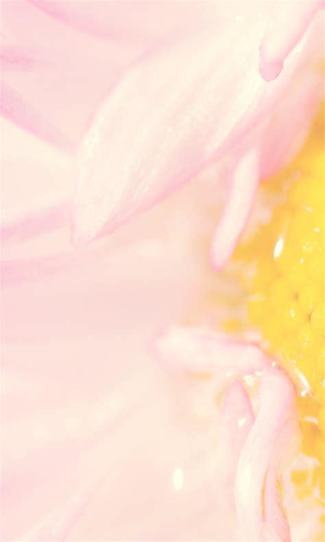 粉色漂亮小花手机壁纸_手机壁纸下载_美桌网