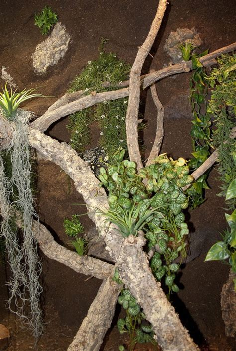 terrarienwand mit  terrarien fuer pythons fuer