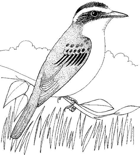 disegni da colorare uccelli greta sta colora disegni di animali ed