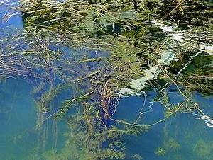 About AIS — Aquatic Invasive Species | Tahoe Boatinspections