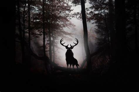 dark woods wallpaper wallpapertag