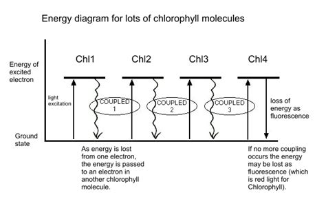 How Does Chlorophyll Absorb
