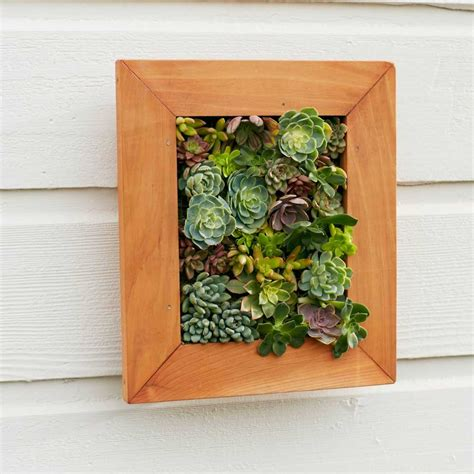 Living Wall Art Succulent Gift  Jiver. Turquoise Living Room Walls. Living Room Entertainment Center. Living Room Furniture Okc. The Bay Living Room Furniture. Safari Decorations For Living Room. Living Room Ceiling Ideas. Mobile Home Living Room Decorating Ideas. Living Room Interiors Pictures