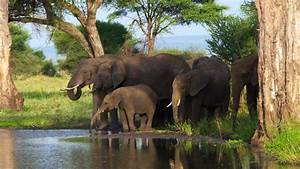 Poverty, corruption drive African elephant poaching