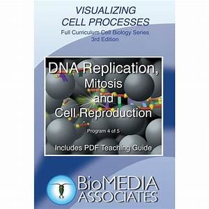 Visualizing Cell Processes  Dna Replication  Mitosis  And