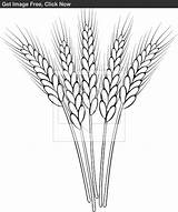 Wheat Clip Outline Stalk Drawing Clipart Coloring Pages Pyrography Drawings Sketch Sketches Embroidery Patterns Tattoo Vector Stencils Sketchite Bunch Getdrawings sketch template
