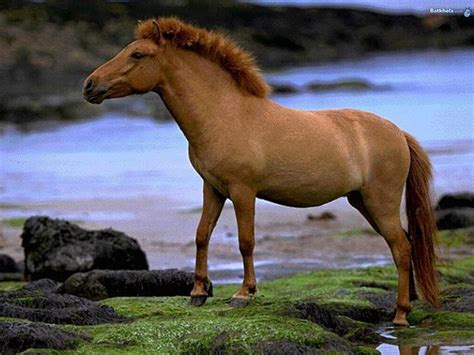horses wild animal wallpapers kingdom horse hd animals desktop running background wildlife fanpop most grouped scenery backgrounds pony 15th november