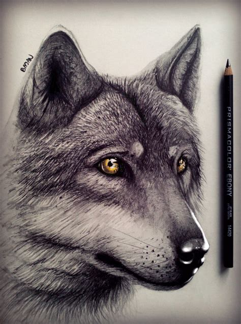 wolf drawing  bajan art  deviantart