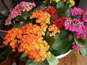 Plante Fleurie Intérieur : plantes grasses fleuries interieur photo de fleur une ~ Premium-room.com Idées de Décoration