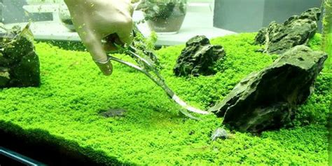 iwagumi aquascape understanding iwagumi aquascaping style the aquarium guide