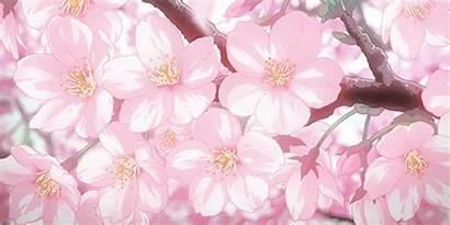 Cherry Anime Blossom Blossoms Animated Pink Ago