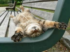 cat relax happy animals facts pictures and