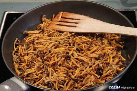 cuisiner chanterelle chanterelles myco33