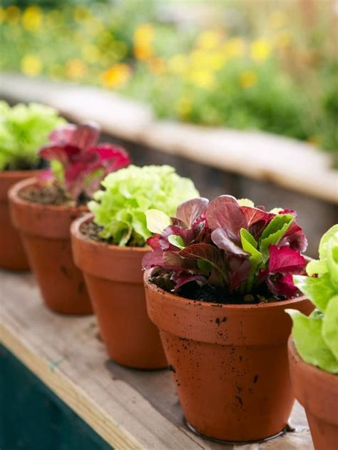 How To Grow Mesclun Salad In A Container Gardening