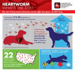 cat heartworm medicine experts suggesting a defense to protect against