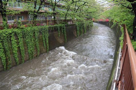 目 黒川 氾濫