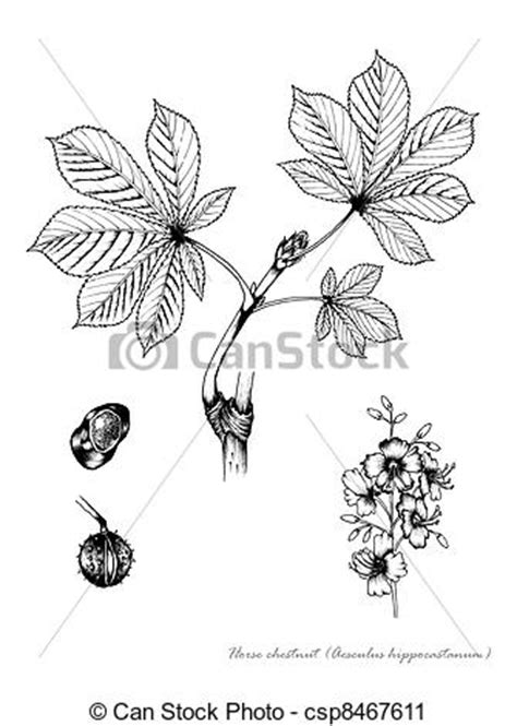 Free 5 Kastanien Clipart And Vector Graphics Clipart Me