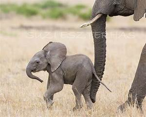 Immortal Unity: BABY ELEPHANT PHOTO- 8 X 10 Print - Baby ...