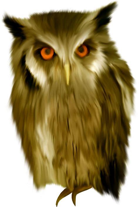 owls clipart eye owls eye transparent