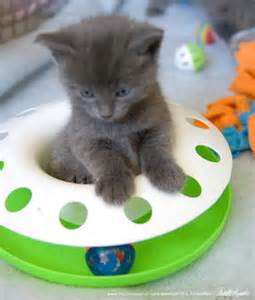 baby cats for adoption cats for adoption kitten names and up for adoption the