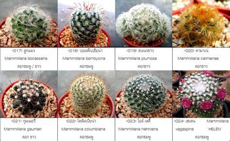 Hello Cactus: สายพันธุ์แคคตัส