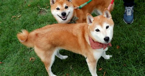 Dogecoin Stock Price Today : Why Dogecoin is the meme ...