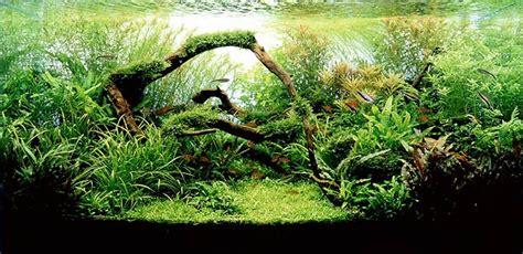 aquascape style 7 aquascaping styles for aquariums the aquarium guide