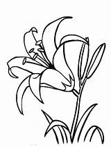 Coloring Flower Pages Lily Flowers Lilies Recommended sketch template
