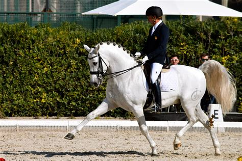 dressage horse andalusian pre horses international bcn behance