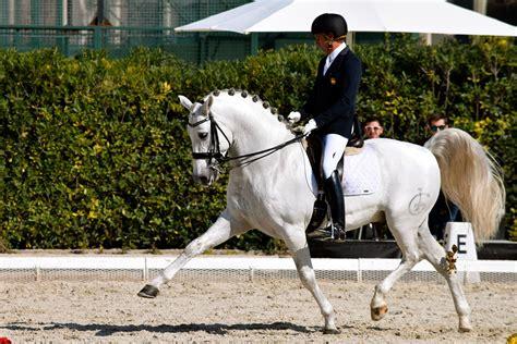 dressage horse andalusian pre horses international bcn behance