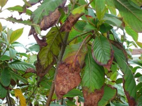 Learn About Types Of Garden Plant Diseases