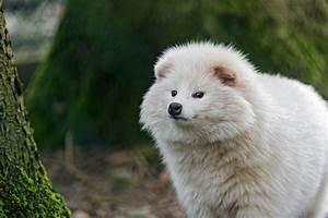 Cute fluffy white raccoon dog | Flickr - Photo Sharing!