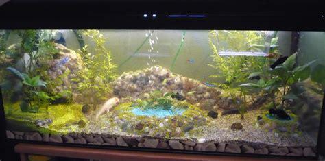 deko für aquarium einfach selbst bauen nerdspirations avec aquarium