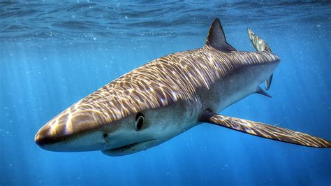 Liveaboard Boats For Rent San Diego by Blue Mako Shark Diving San Diego Shark Diving