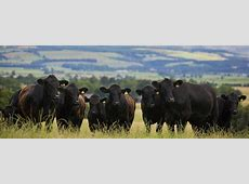 Cattle Shows, Cattle Sales & Herd Databases AACS