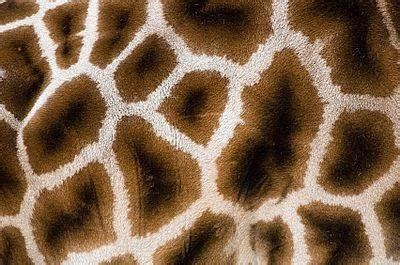 Animal Print Wallpaper Giraffe - giraffe print new hd wallpapers