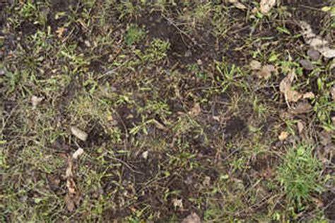 jungle floor texture rainforest floor texture www pixshark com images galleries with a bite