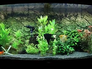 Aquarium Einrichten Beispiele : aquarium einrichten woche 6 alles im griff ~ Frokenaadalensverden.com Haus und Dekorationen