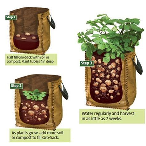 how to grow potatoes how to grow potato in container urban balcony garden