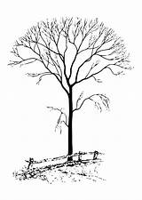 Tree Coloring Leaves Pages Without Printable sketch template