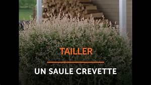 Quand Tailler Un Saule Crevette : tailler un saule crevette youtube ~ Melissatoandfro.com Idées de Décoration