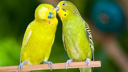 Bird Cage Birds Parrot Bajri 1080p