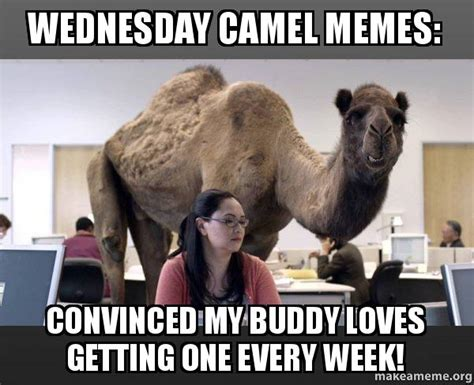 Hump Day Camel Meme - wednesday camel memes convinced my buddy loves getting one every week hump day camel make