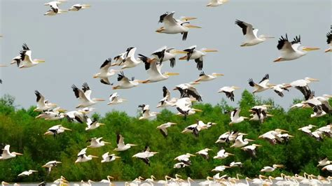more than 90 percent of migratory birds enjoy very little