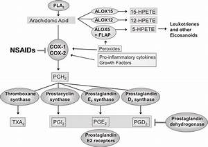 Prostaglandin Synthesis Pathway  The Cox Enzymes Cox1 And