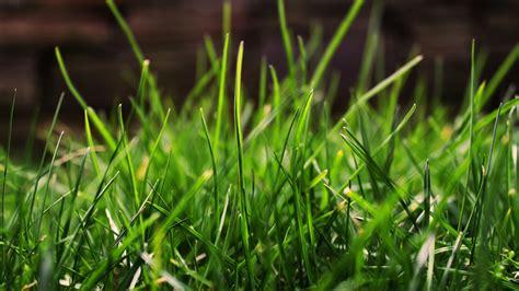zelenaya trava oboi na rabochiy stol abaliru