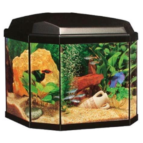 combien de poisson dans un aquarium aquarium 30 litres poisson