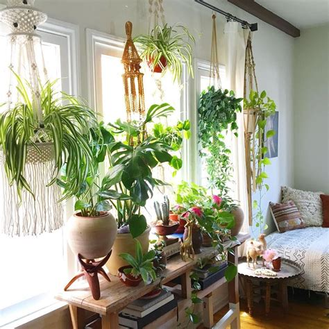 Plants For Window Sills by 15 Beautiful Window Plants Ideas That Will Freshen Up Your