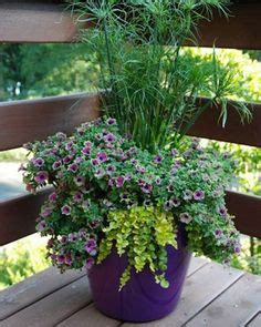 year plants for pots 10 plants for year containers these survivors can 1979